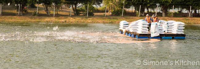 Voeren van de vissen