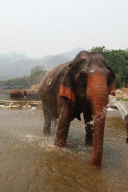 elephant-nature-pakr-3