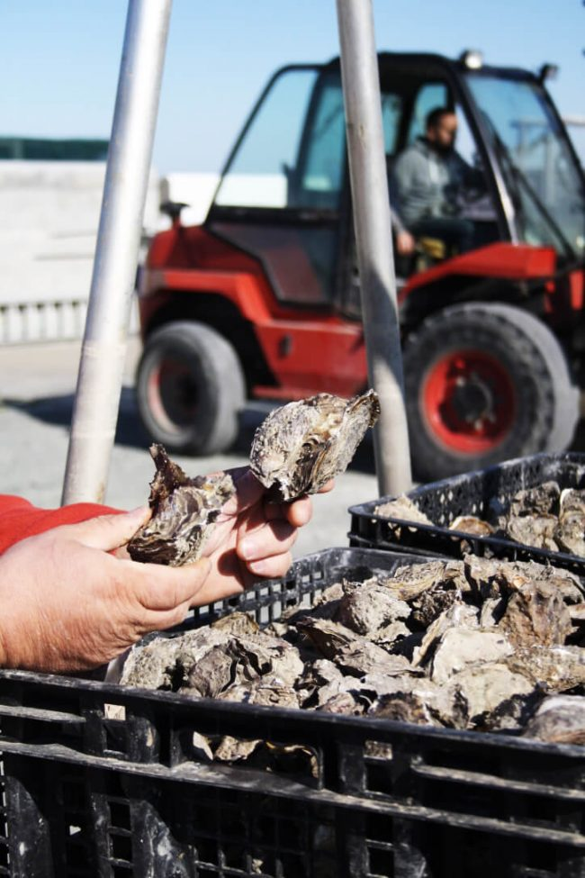 ile-de-re-oesters
