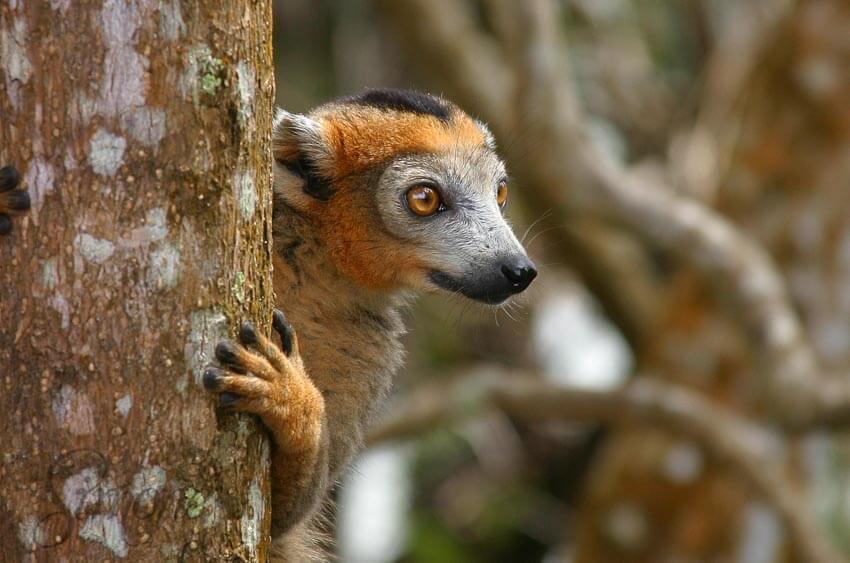 Vijf plekken in Madagaskar die je wilt hebben gezien   simoneskitchen.nl