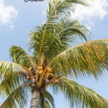 Culinair genieten op Curacao | simoneskitchen.nl
